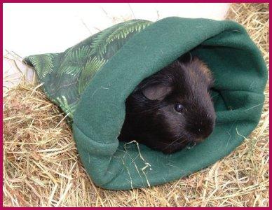 jackies guinea pigs