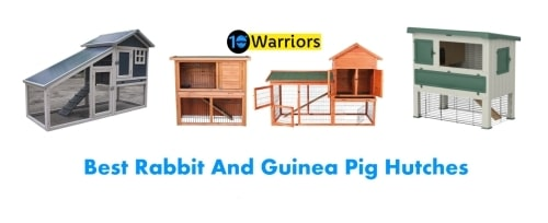 best rabbit guinea pig hutch