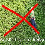 Best hedge cutting ladders (also for high hedges or uneven ground)