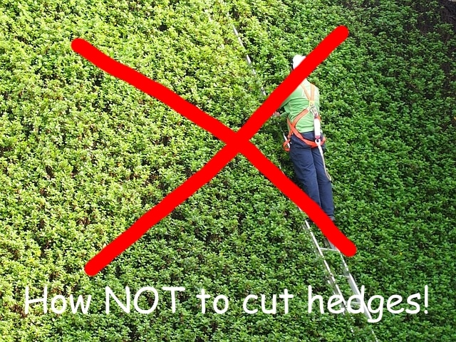 best ladder for cutting hedges