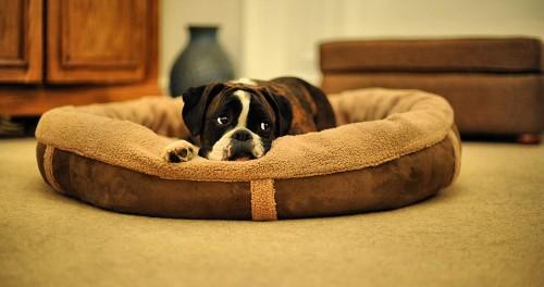 Wolfybeds Wraparound Fleece Dog Bed Size Large