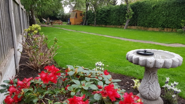 March Lawn Renovation - After Picture 2