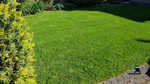 how to get a green lawn